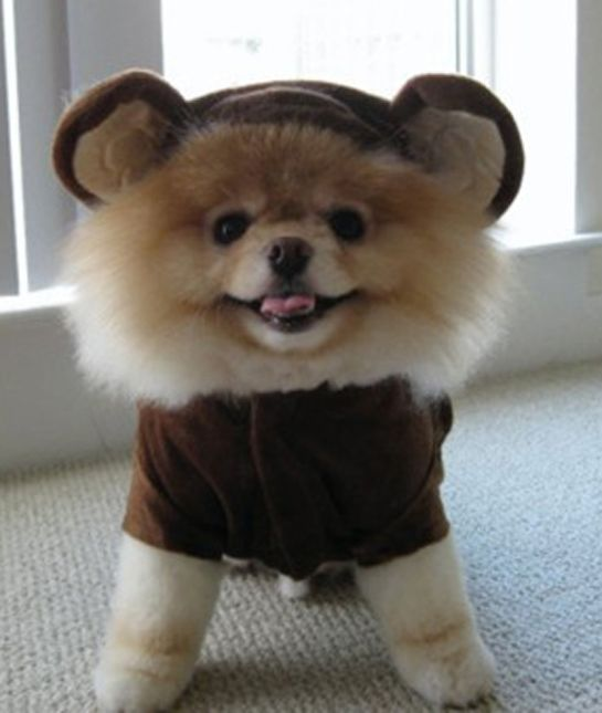 10 Puppies That Look Just Like Teddy Bears