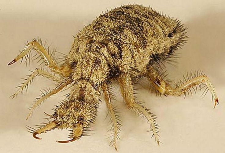 20 insectes qui possèdent des caractéristiques physiques fascinantes   Daily Geek Show