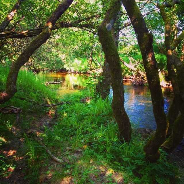 Summer by the river. Wicklow, Ireland :)