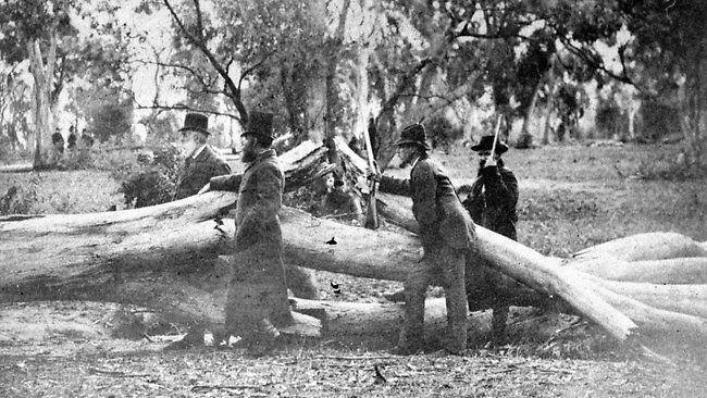 Photograph taken during the siege at Glenrowan