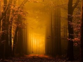 Mist Forest