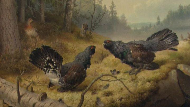 Ferdinand von Wright - Taistelevat metsot - lapset taiteen tulkitsijoina   Elävä arkisto  YLE (video 1:15).