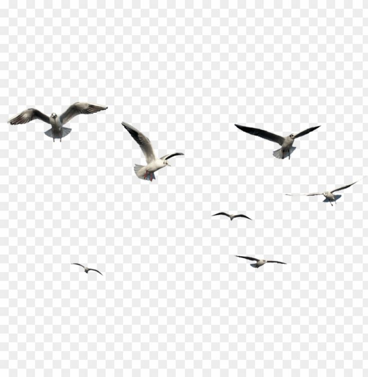 Flying Bird Bird Png Image With Transparent Background Png Free Png Images In 2021 Free Png Downloads Photo Background Images Hd Birds Flying