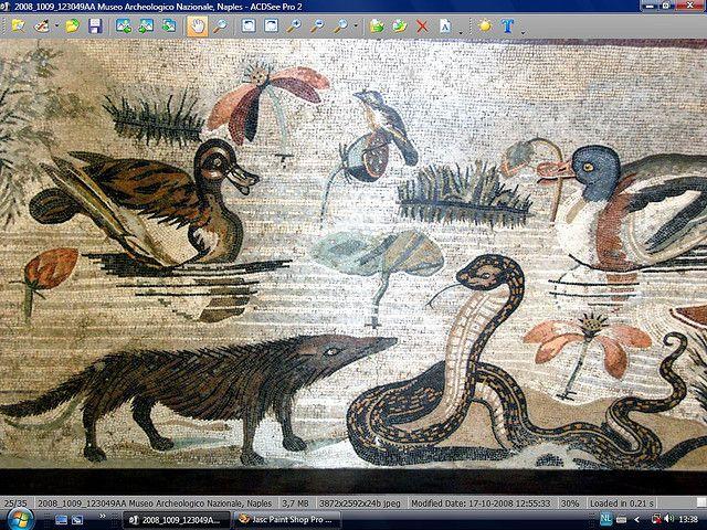 Scena nilotica con anatre e una mangusta che attacca un serpente - dalla Casa del Fauno di Pompei - Museo Arch. Naz. Napoli