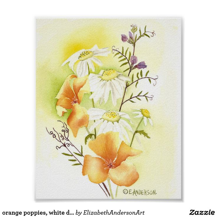 orange poppies, white daisies and purple sweetpeas
