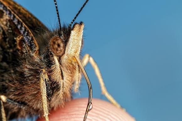 Finger Fed Butterfly