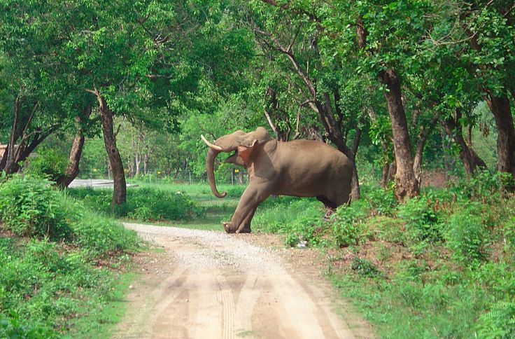 Jim Corbett National Park - Paradise for wildlife Enthusiast Located within the Nainital district of Uttarakhand, Jim Corbett National Park is rated amongst the finest national parks of Republic of India.