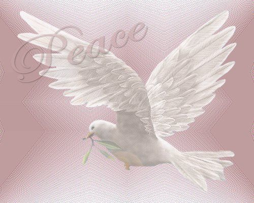.: White Dove, Peace Dove White Flying Jpg, God Quotes, Daily Inspiration, Peace Pictures, Father God, Peace White, Pink Peace, Heavens