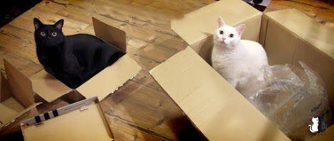 Mańki – Google+ #cats funnycats #mańki #cute #koty #cat