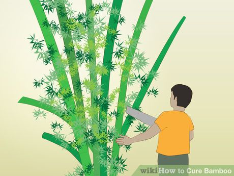 Image titled Cure Bamboo Step 2