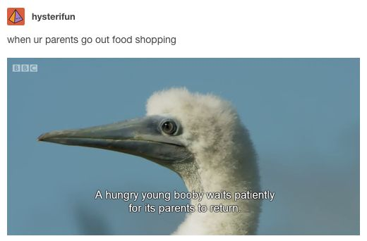 This familiar craving:   23 Jokes About Parents That Are Funny Because They're True