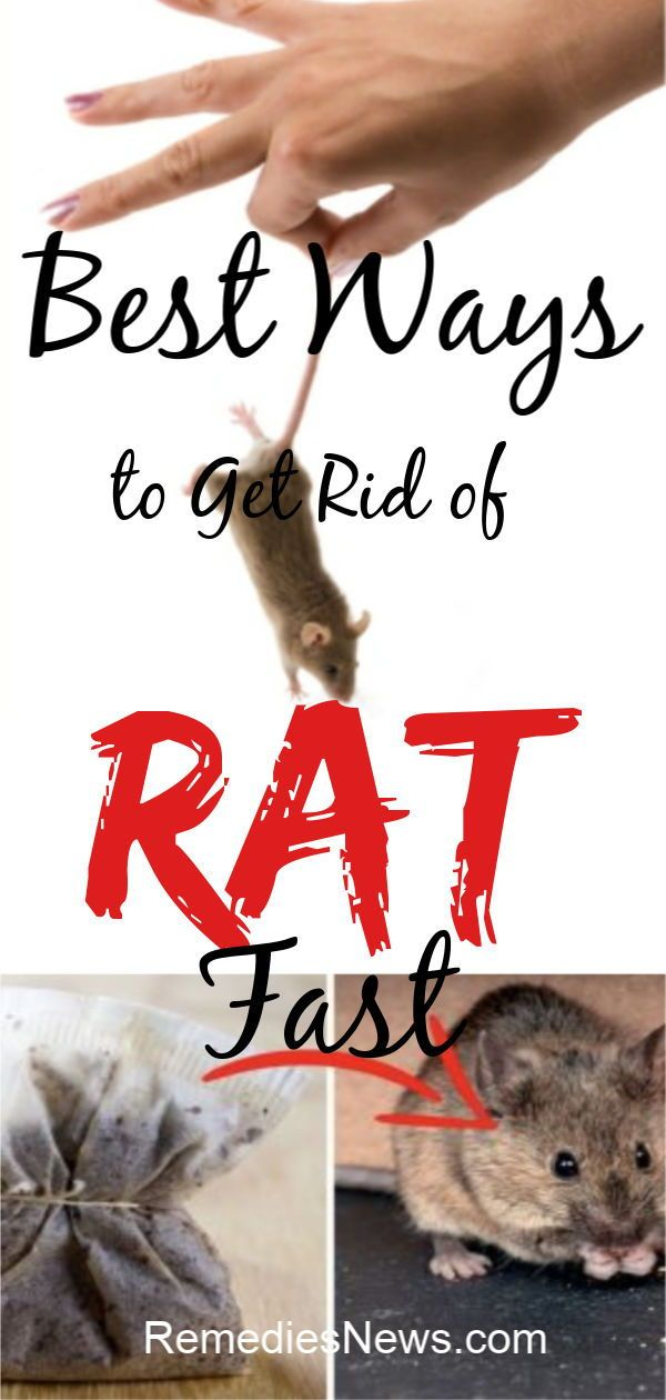 8 Fastest Ways On How To Get Rid Of Mice Naturally At Home In The Wall Attic Garage Etc Eliminate Entry Points Getting Rid Of Mice Getting Rid Of Rats Rid