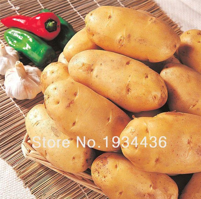 100 PCS Seeds Fingerling Potato Bonsai Plants Vegetables Sweet Healthy Garden O