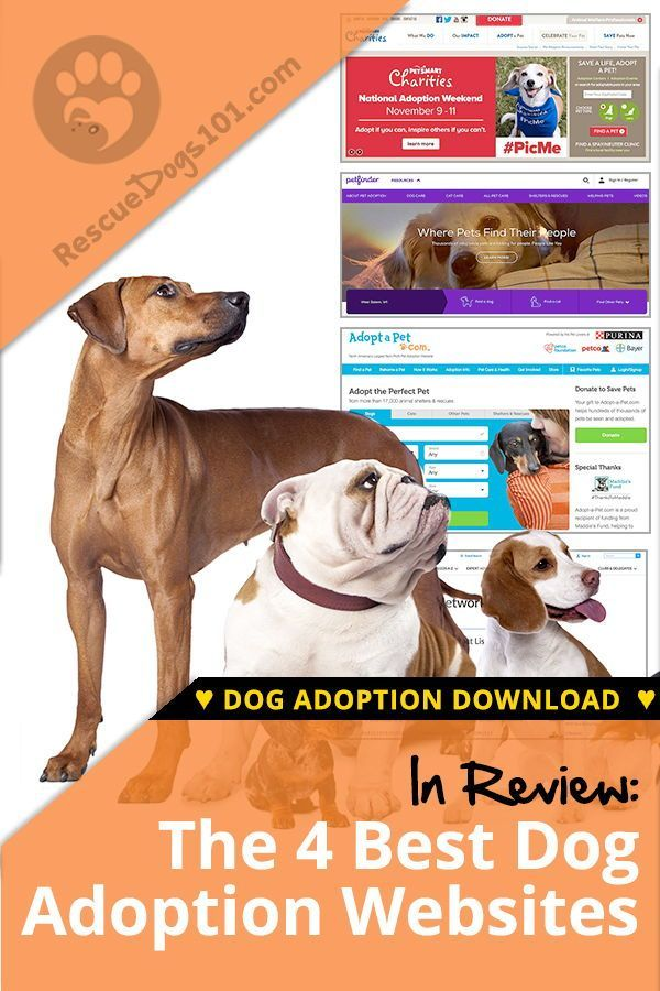 The 4 Best Adoption Websites For Dogs Adoption Websites Dogs