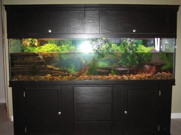 36 best images about turt tank ideas on pinterest betta for Fish tank turtles