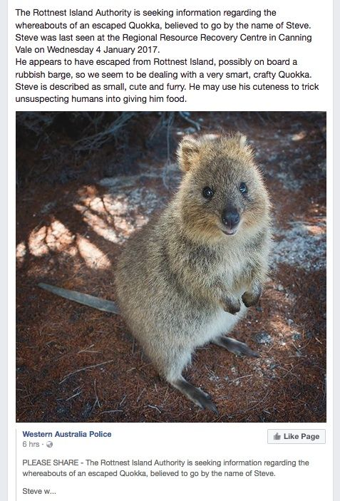 Steve the Quokka