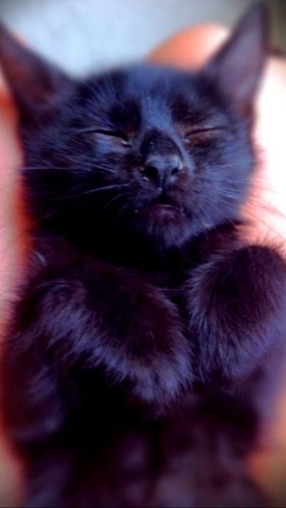 Klicken Sie auf das Foto Wenn Sie mehr süße Katzenfotos sehen möchten #catloverscommunity