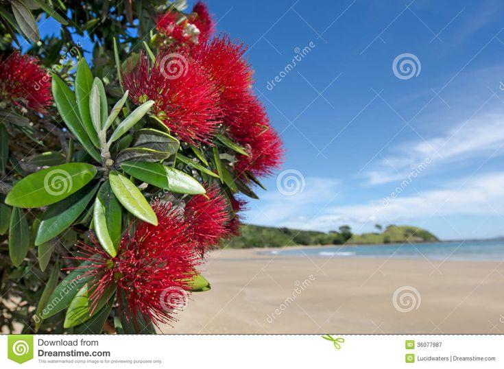 Image result for pohutukawa flower