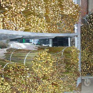 http://www.purpurea.it/forestali-autoctone/49-salix-eleagnos-salice-ripaiolo.html