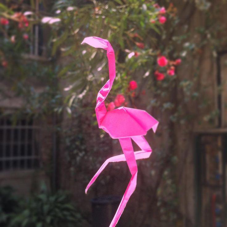 Flamingo dance!
