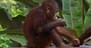 Bali Safari and Marine Park Jungle Hopper Package