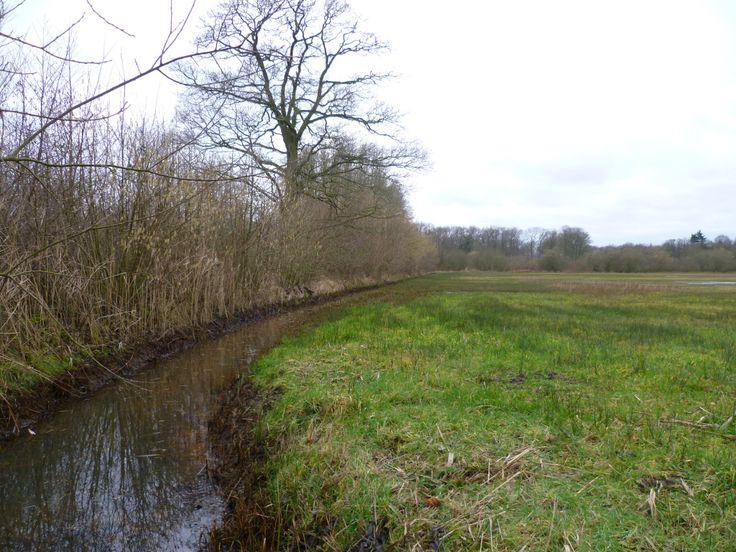 2014-02-09 De Hagenbeek slingert zich door het kwelgebied
