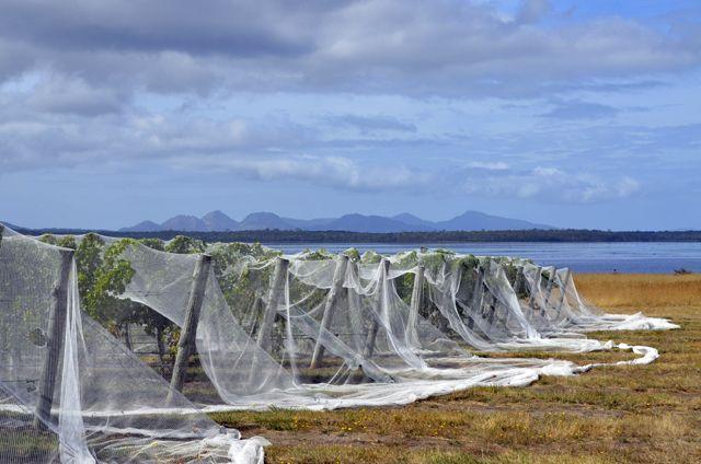 The Hazards Vineyard, Tasmania.