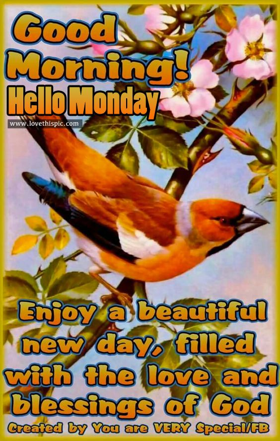 Good Morning, Hello Monday