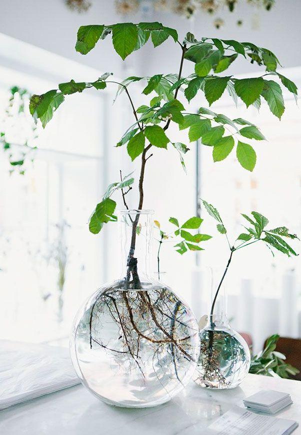 prachtige vaas en wortelstelsel Botanische trend | Storyplanter