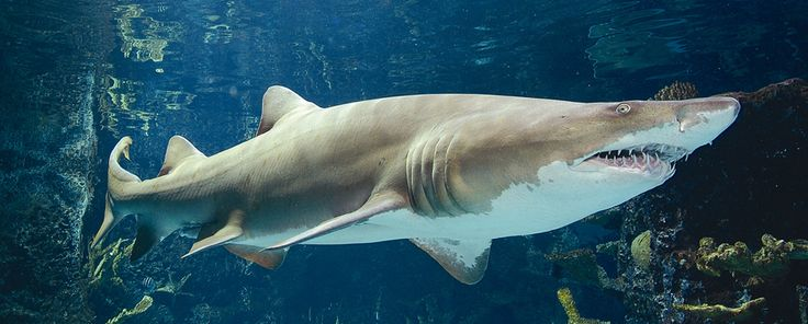 Top 10 Most Interesting Facts about Sharks - PEI Magazine
