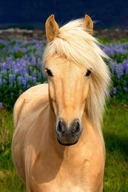 1f Lupine Horses 1388 by phyzman (© Dean Baird), via http://Flickr.com