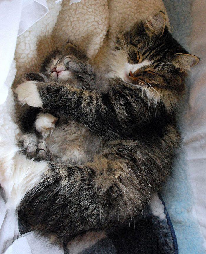 50 кошек и их маленькие копии