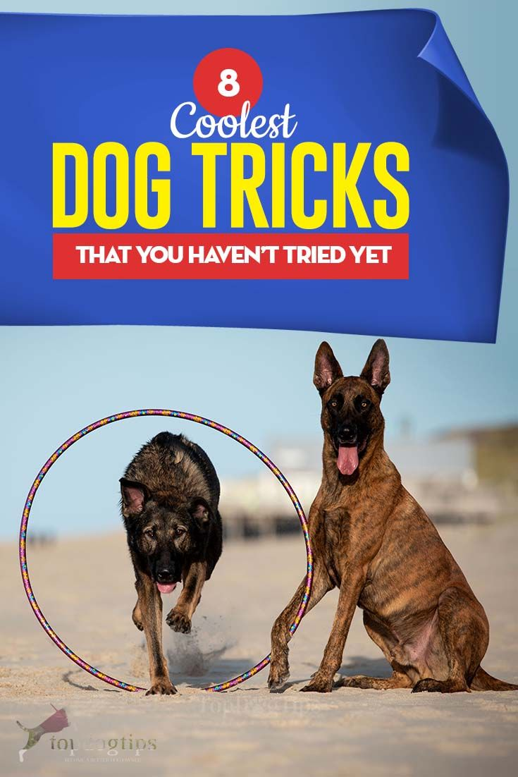 8 Coolest Dog Tricks That You Didn T Know About Cool Dog Tricks