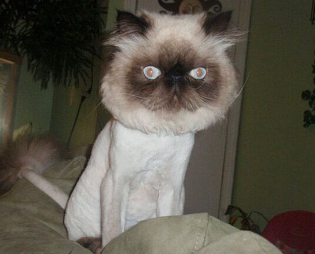 25 Adorably Tragic Half-Shaved Animals. These are so good. Especially the cats.
