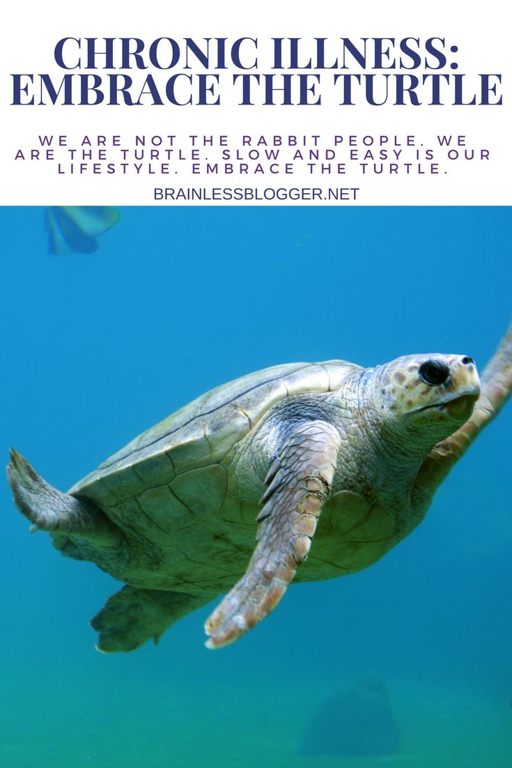 118 best my spirit animals the turtle and the ant images on chronic illness embrace the turtle biocorpaavc Choice Image