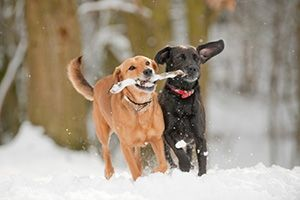 Cold Weather Tips for Pet Owners (because Saskatoon winters are, well, chilly!)
