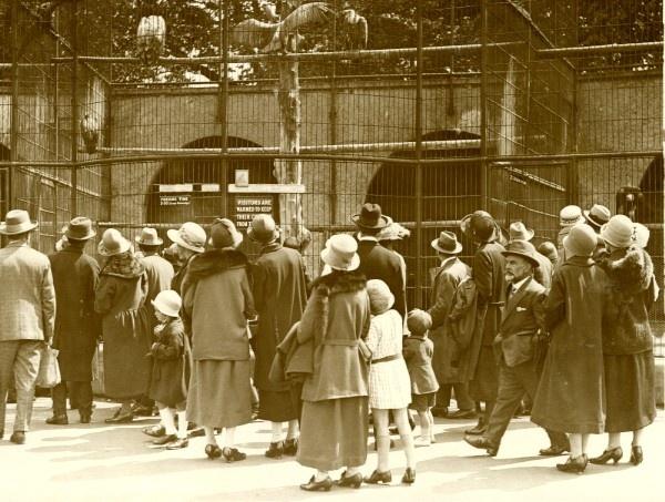 London Zoo, 1930