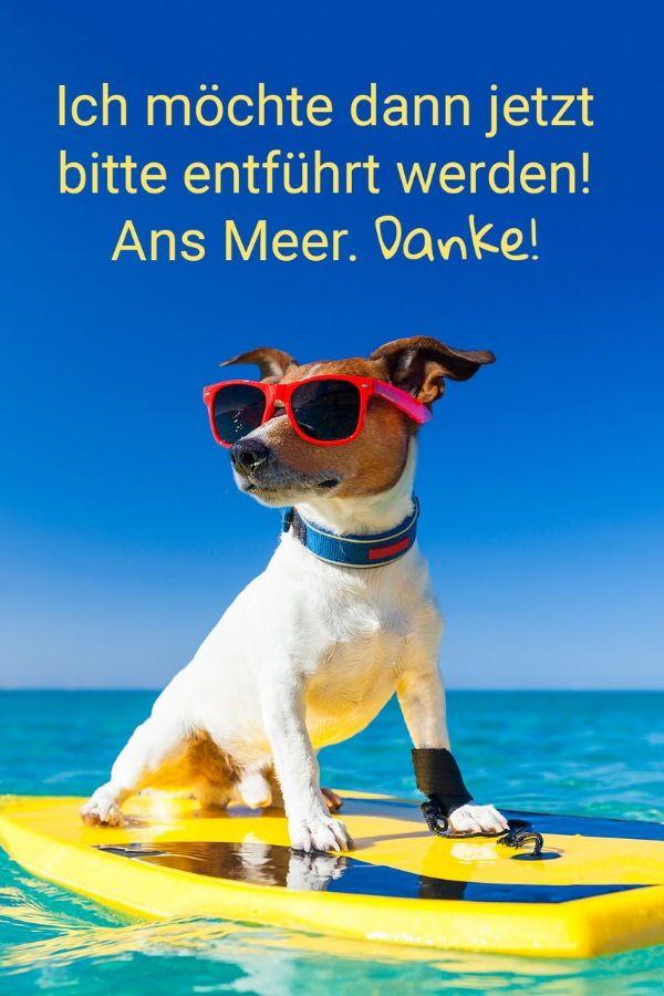 Ich Mochte Dann Jetzt Bitte Entfuhrt Werden Ans Meer Danke Hunde Strand Goodydoo Helpingisbeautiful Lustige Tierbilder Hunde Erziehen Hunde Mischlinge