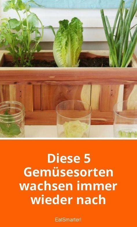 Diese 5 Gemüsesorten wachsen immer wieder nach