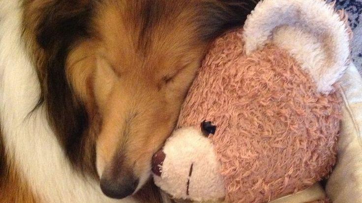 Petition · Le procureur de Bonneville: Condamnation de M. Jean Louis Ravanel qui a écrasé notre chienne · Change.org