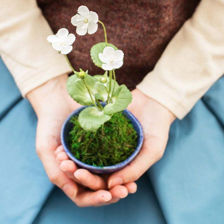 可憐に咲く小さなお花に癒やされる 手づくりの和の鉢植えの会 | FELISSIMO