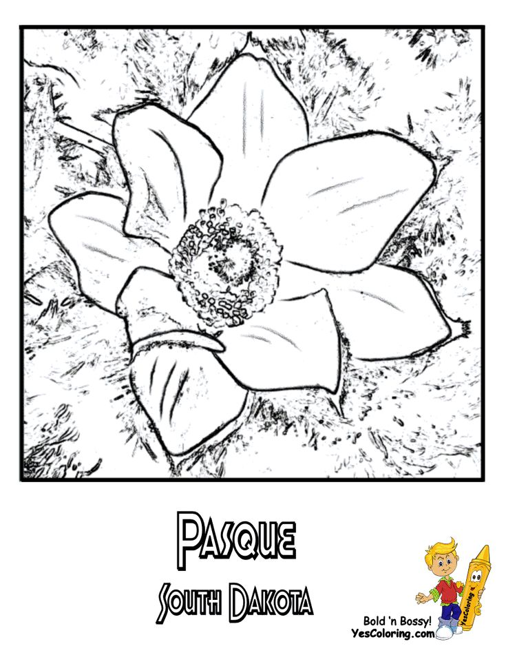 South Dakota State Flower Coloring Page
