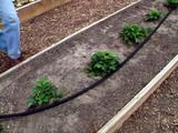 Great tutorial on how to set up a soaker hose irrigation system!