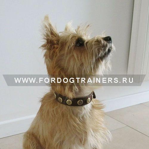 Оригинальный ошейник для щенков и маленьких собак - S28 -> 1364.65 руб.