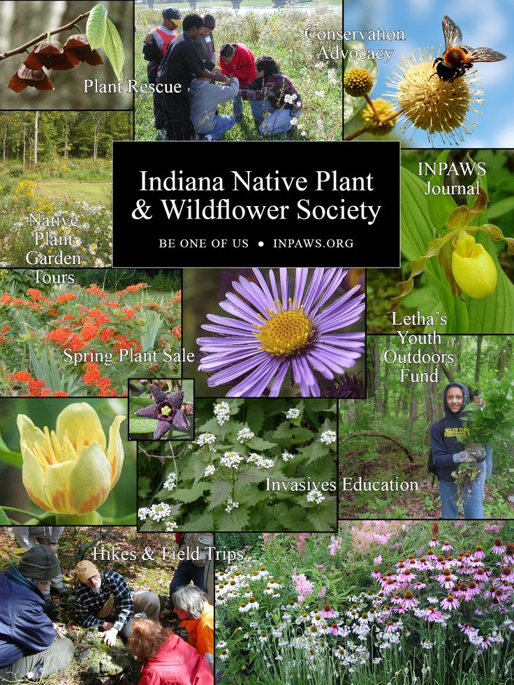 48 best indiana native plants images on pinterest
