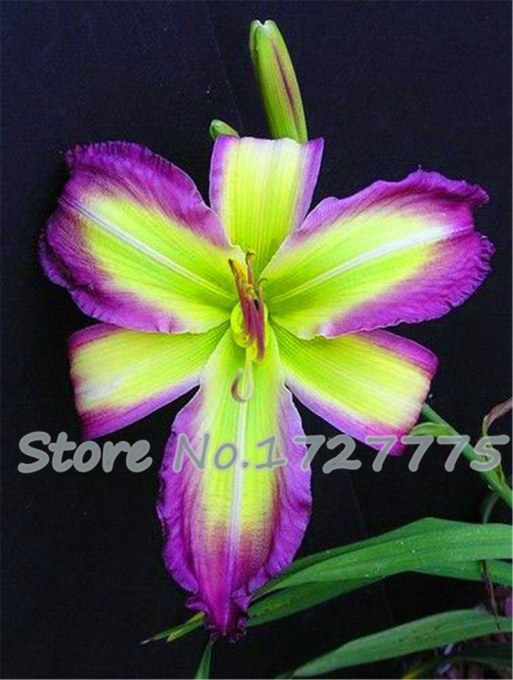 más de 25 ideas únicas sobre planta de lirio en pinterest | planta
