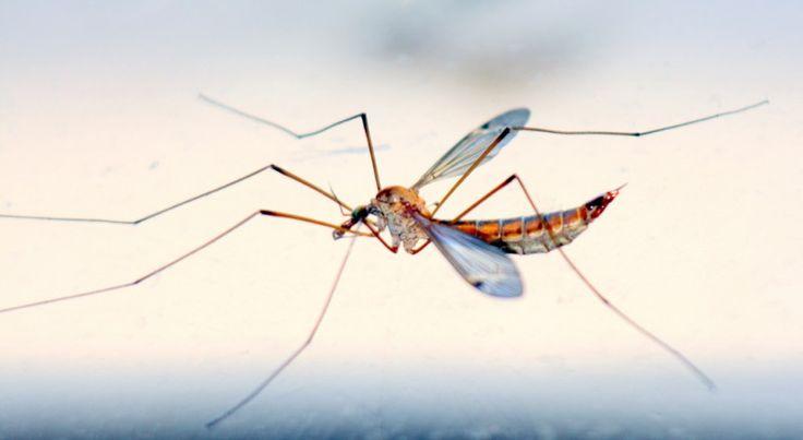 Mückenstiche mit  Mundwasser.behandeln