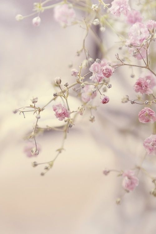 Above: Flower Tree - Lady-Tori HERE . Beauty doesn't need ornaments. Softness can't bear the weight of ornaments. . ~Munshi Premchand