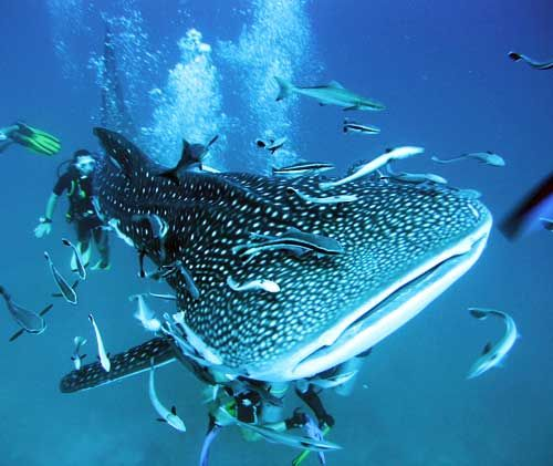 17 best ideas about scuba diving thailand on pinterest scuba diving diving and cave diving - Dive in koh tao ...