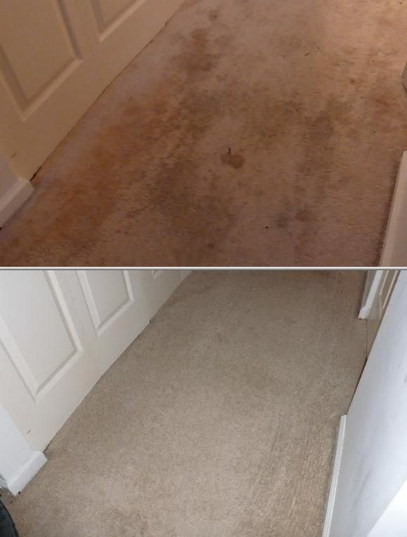 25+ Unique Top Rated Carpet Cleaners Ideas On Pinterest | Carpet Cleaning  Machines, Best Carpet And Diy Carpet Cleaner